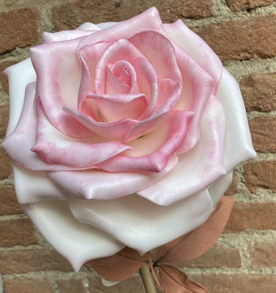 rose in isolon e sfumature