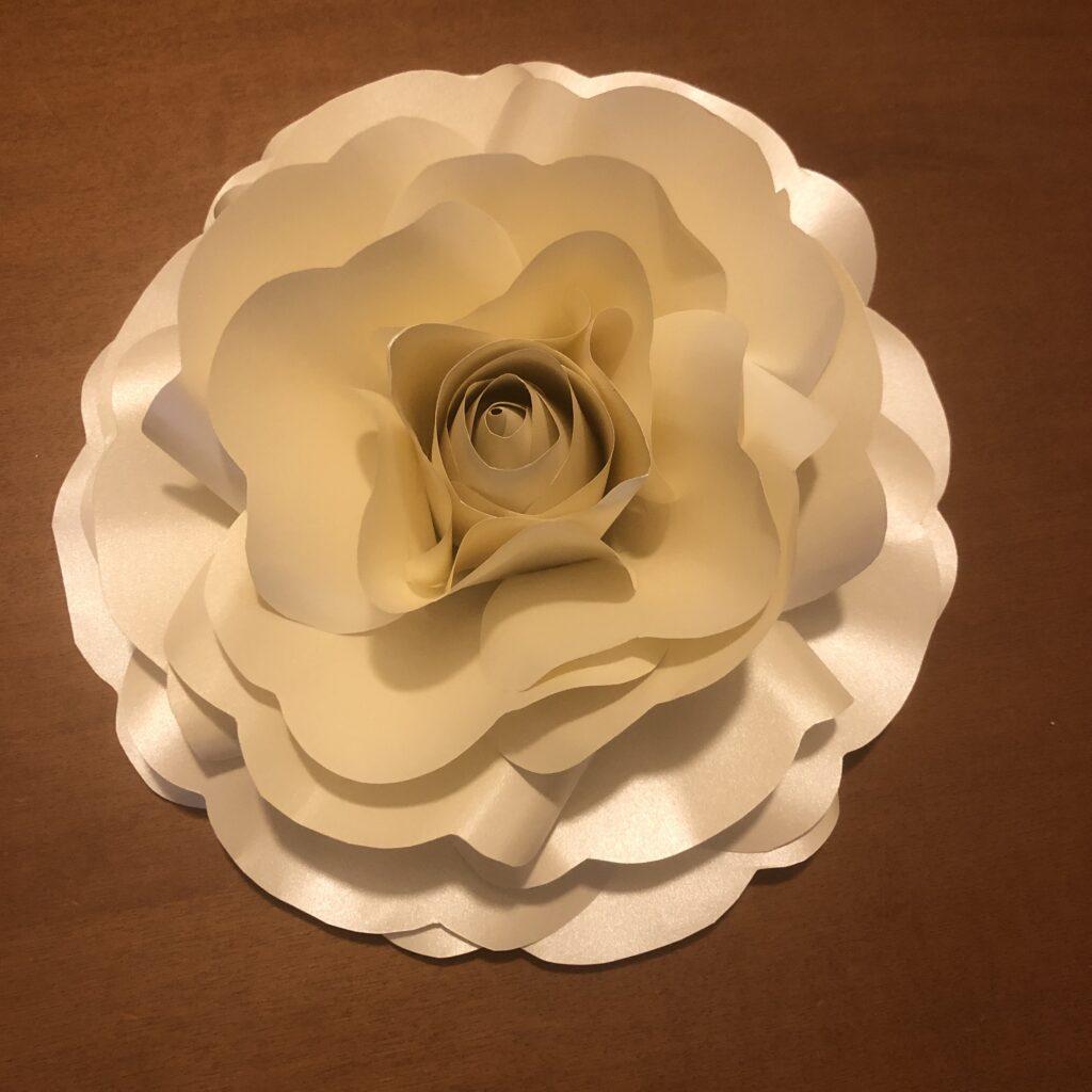 Anche dal cartoncino possono sbocciare splendide rose giganti